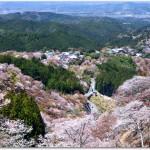 吉野山の花見のコースは?泊まれる宿は?宴会ができる?