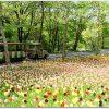 国営武蔵丘陵森林公園でゴールデンウィーク!グルメと子連れおすすめ情報