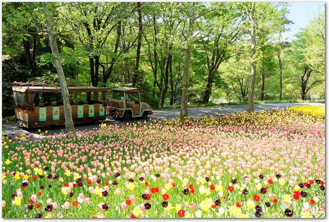 武蔵丘陵森林公園のカラフルな花畑とパークトレイン